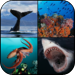 Ocean Encounters:  A Photographic Exploration of Marine Wildlife by Br